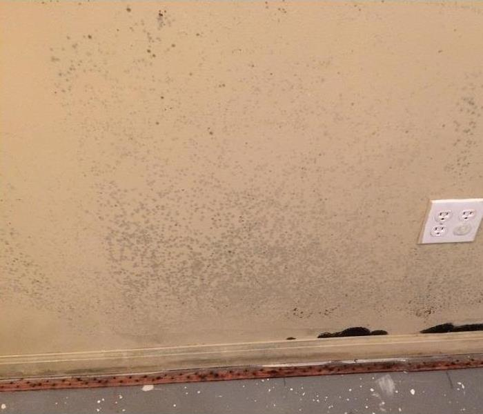 Removing only affected moldy drywall Before