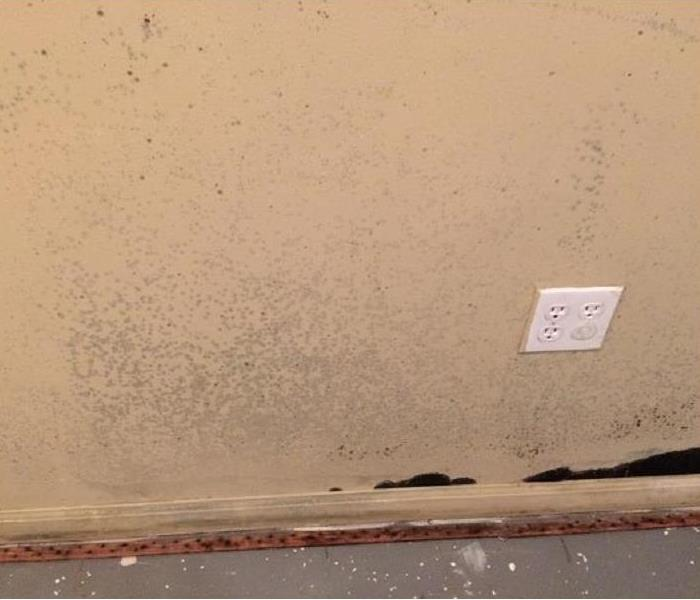 Mold visible on your walls